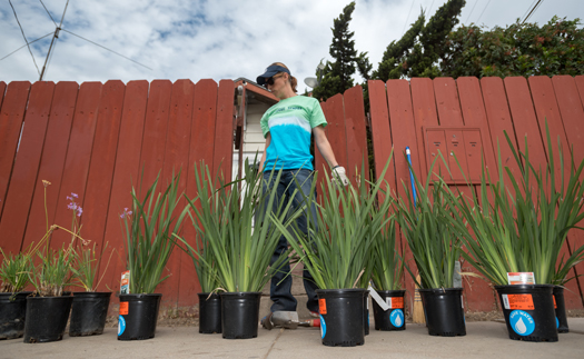 SDG&E volunteers plant drought-resistant succulents and trees, helping to improve the neighborhood